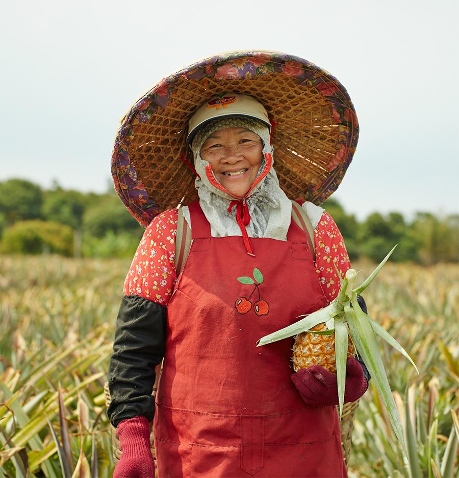 南投のパイナップル畑のパイナップル農家