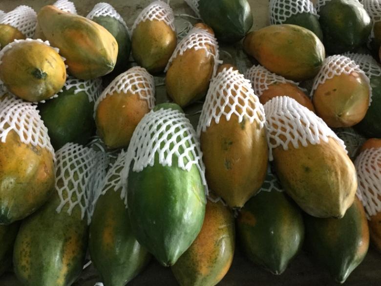 木瓜(ムーグア)